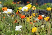 Mountain flower spirit — Stock Photo
