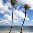 Two palms on a beach — Stock Photo