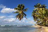 Palm and beach — Stock Photo