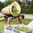 Harvesting — Stock Photo