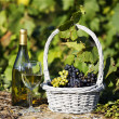 French wine — Stock Photo #6559839