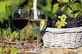 Wine spirit — Stock Photo