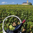 French wine — Stock Photo #6741256