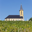 Vineyards and church — Stock Photo