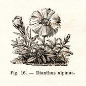 Vintage kwiaty ilustracji — Zdjęcie stockowe