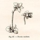 Vintage blommor illustrationer — Stockfoto