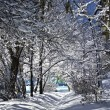 Snow-covered branches of trees — Stock Photo
