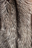 Silver fox fur background — Stock Photo
