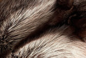 Silver fox fur background — Stock fotografie