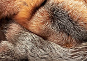 Combined silver and red fox fur background — ストック写真