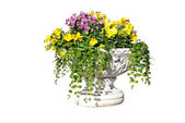 The white pot with yellow, pink and purple flowers — Stock Photo