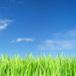 Blue sunny sky and green grass — Stock Photo