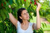 Beautiful young girl picking cherries — Stock Photo