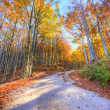 Vibrant colors of forest in autumn — Stock Photo #6232221