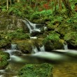 Creek in forest in slovenia - western europe — Stock Photo