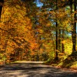 Vibrant colors of forest in autumn — Stock Photo
