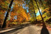 Couleurs vibrantes de la forêt en automne — Photo