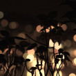 Stock Photo: Silhouette of dried bushes in background blurry lights