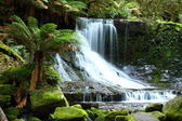 Gorgeous Russel Falls splash down in the Mt Field National Park, Tasmania, — Stock Photo