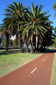 Bicycle path in Perth, Australia — Stock Photo