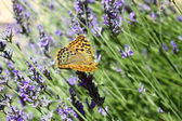 Beautiful Butterfly — Stock Photo
