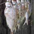 Salted fish - Stock Photo
