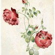 Greeting card with rose. Illustration roses. — Stok Vektör #6390388