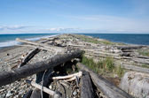Dungeness Spit trail between surf and cal waters — Stock Photo