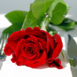 Red rose on the table - Stock Photo