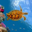 Royalty-Free Stock Photo: Coral reef and turtle