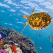Underwater landscape with couple of Butterflyfishes and turtle — Stock Photo #5428338