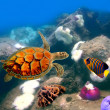 Sea turtle — Stock Photo #5428350