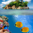 Photo of a coral colony on a reef top — Stock Photo #5428361