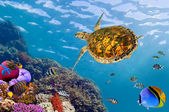 Underwater landscape with couple of Butterflyfishes and turtle — Stock Photo