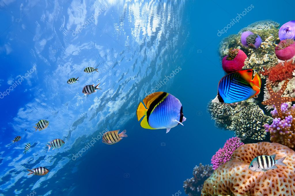 Threadfin butterflyfish (Chaetodon auriga), Red Sea, Egypt — Stock Photo #5428345