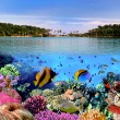 Photo of a coral colony — Stock Photo #5464734