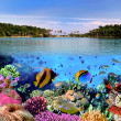 Stock Photo: Photo of coral colony