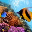 Coral reef — Stock Photo #5464736