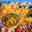 Underwater landscape with couple of Butterflyfishes and turtle — Stock Photo #5464741