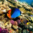 Coral Scene, shot in the Red Sea — Stock Photo
