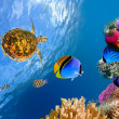 Underwater landscape with couple of Butterflyfishes and turtle - Stock Photo