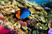 Coral Scene, shot in the Red Sea — Stock Photo