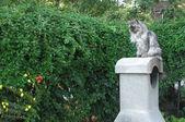 Home cat in the garden — Stock Photo