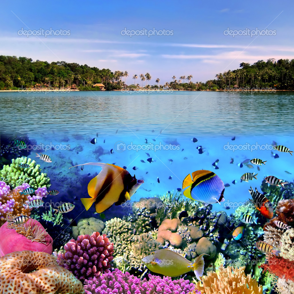 Фотообои Фото коралловые колонии