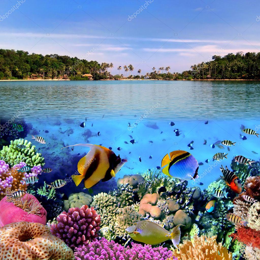 Фотообои Photo of a coral colony