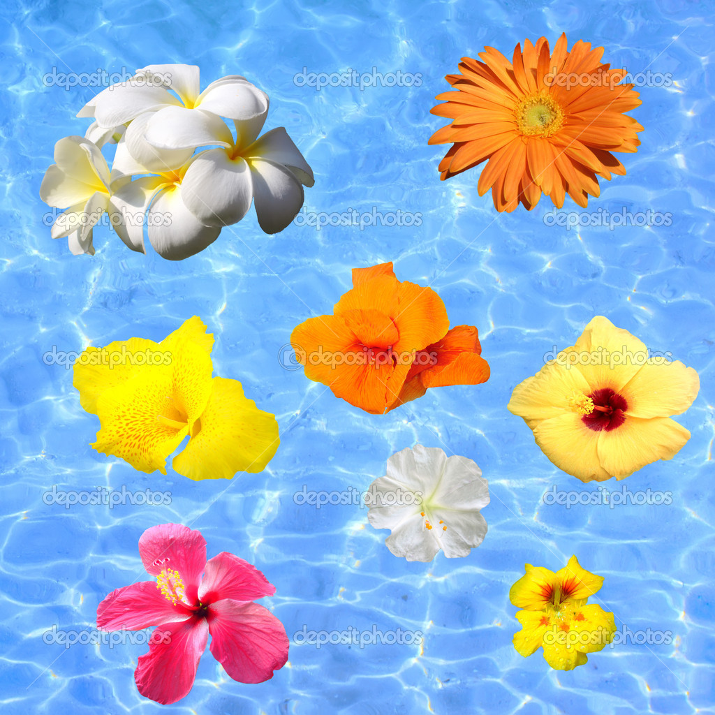 Tropical flowers floating in blue water stock photo for Floating flowers in water