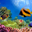 Marine life on the coral reef - Stock Photo