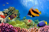 Marine life on the coral reef — Stock Photo
