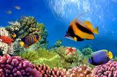 Vie marine sur le récif de corail — Photo