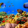 Photo of a coral colony on a reef, Egypt — Stock Photo